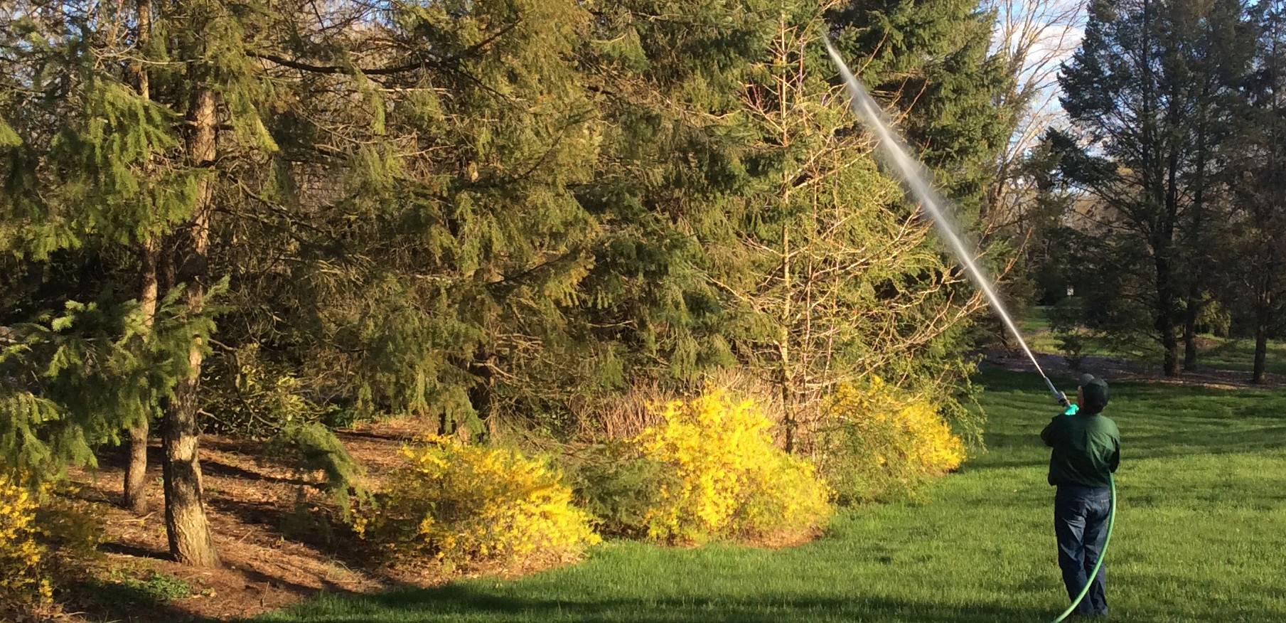 DORMANT OIL PROTECTS TREES AND SHRUBS