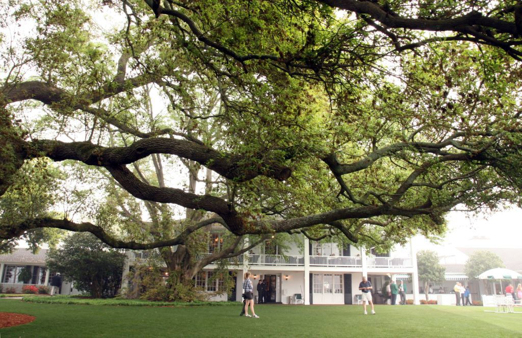 The majestic branches of this Live Oak tree provide cooling shade from the southern heat.