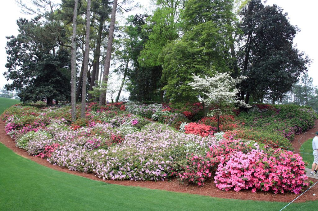 Colorful azaleas and dogwoods pop with spring color. Plantings like this are the envy of any garden enthusiast.