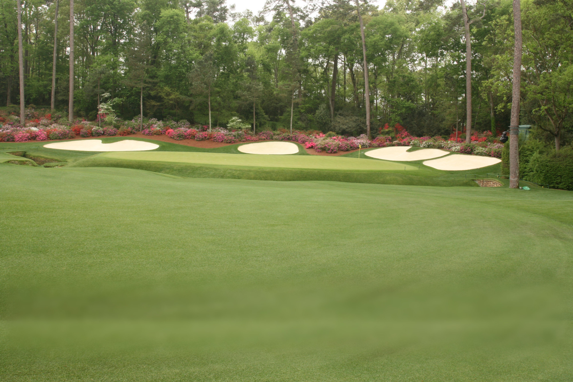 Augusta National: a golfer's and plant enthusiast's paradise